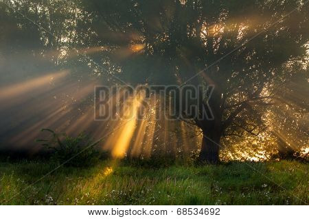 Sun Beams Thorough Trees And Greens