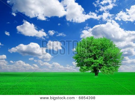 magnificent green tree in a fields