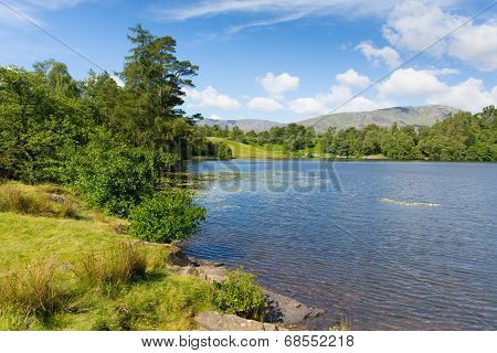 Tarn Hows Lake District National Park England uk between Coniston Water and Windermere on a beautiful sunny summer day popular tourist attraction poster