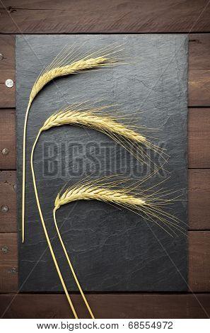Wheat Ears On Slate