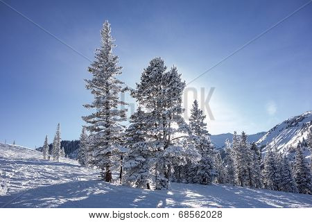 Trees On Ski Slopes With Sun