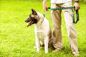 Man and Akita Inu dog walk in the park. He keeps the dog on the leash. poster