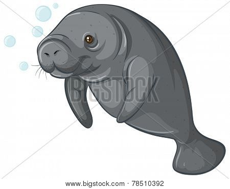 Illustration of a close up sea cow