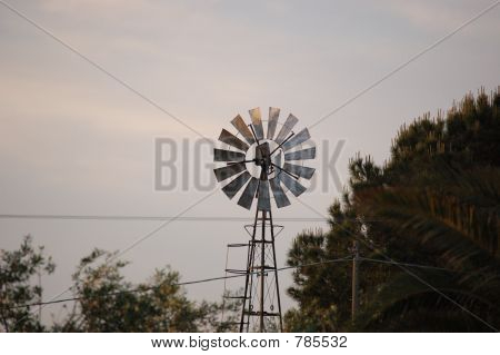 windmill on a tree panorama poster
