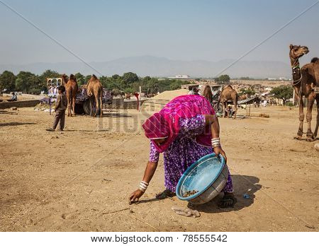 PUSHKAR, INDIA - NOVEMBER 20, 2012: Indian woman collects camel dung for fire fuel at Pushkar Mela -  annual 5 day camel and livestock fair one of the world largest camel fairs and tourist attraction