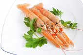 closeup of three prawns with parsley on a white plate isolated with clipping path poster