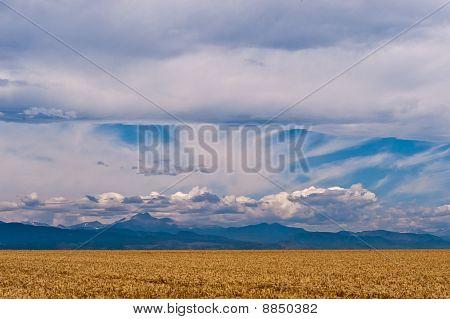 Golden Fruited Plains
