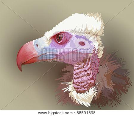 Vulture portrait. Vector illustration / Eps10