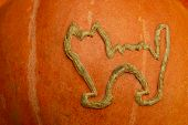 a witches' cat carved on the side of a halloween pumpkin. poster