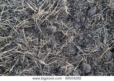 Field (black earth) after harvest