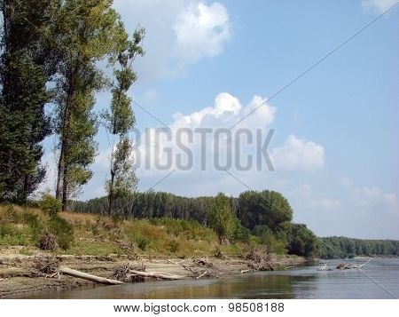 Poplar forests on the Danube islands