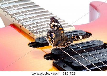 Buckeye Butterfly On A A Guitar