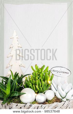 Christmas Plant Arrangement