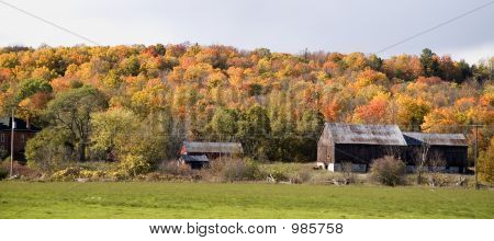 Autumn Colours, Rustic Barn