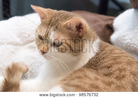Cat looking at something