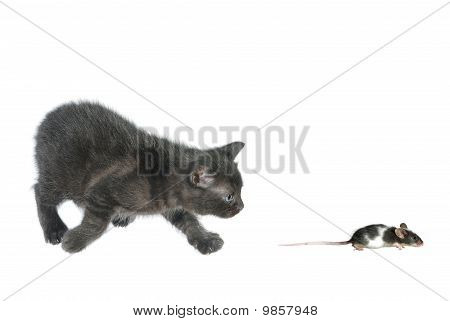 Kitten And Running Away Mouse