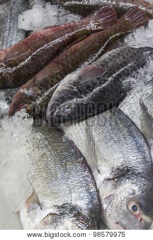 fresh ocean fish in ice