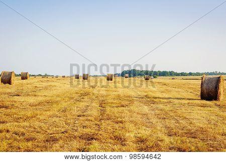 Stack Hay On Summer Field.