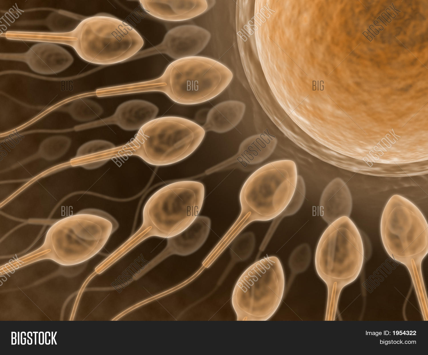 sperm preserved How