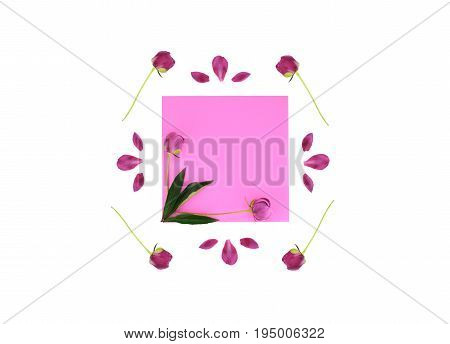 Frame with flowers and leaves isolated on white background. Flat lay style, overhead view.