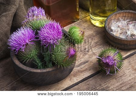 Beautiful Blossoming Buds Thistle