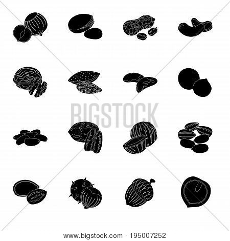 Hazelnut, pistachios, peanuts and other types of nuts.Different types of nuts set collection icons in black style vector symbol stock illustration.