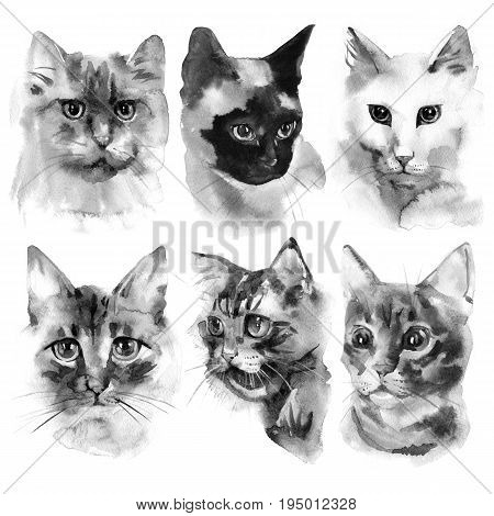 Hand drawn watercolor black and white cats shapes collection