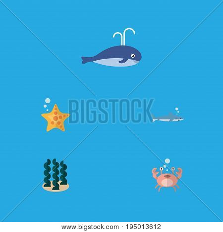 Flat Icon Sea Set Of Sea Star, Cachalot, Cancer And Other Vector Objects. Also Includes Starfish, Humpback, Gray Elements.
