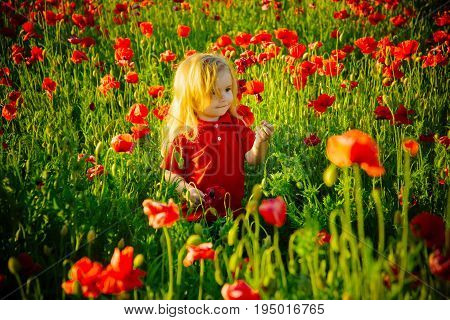child or smiling little boy with long blonde hair in red shirt in flower field of poppy with green stem on natural background summer spring childhood and happiness opium ecology and environment
