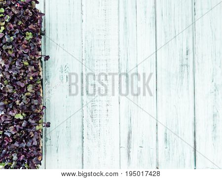 Fresh Cress On Wooden Background (selective Focus)
