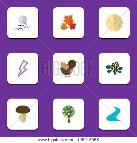 Flat Icon Nature Set Of Tributary, Gull, Berry And Other Vector Objects. Also Includes Lightning, Flower, Tributary Elements.