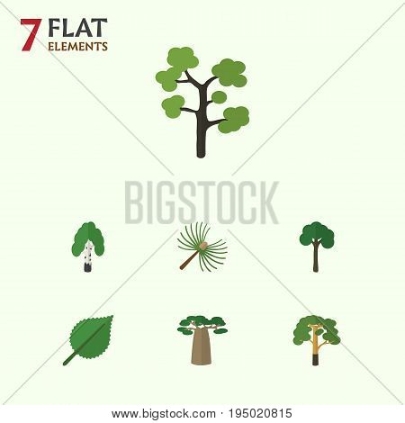 Flat Icon Ecology Set Of Baobab, Linden, Garden And Other Vector Objects. Also Includes Leaf, Alder, Evergreen Elements.