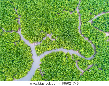 top view tree and river beautiful background aerial view mangrove forest Natural grass texture