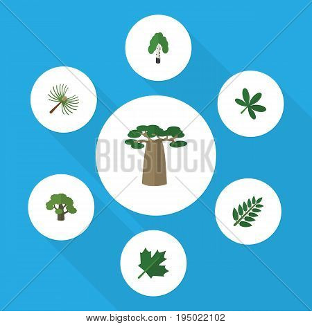 Flat Icon Nature Set Of Baobab, Maple, Tree And Other Vector Objects. Also Includes Leaves, Birch, Oak Elements.