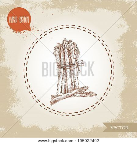 Hand drawn sketch style asparagus bunch. Organic food farm fresh vector illustration on vintage background.