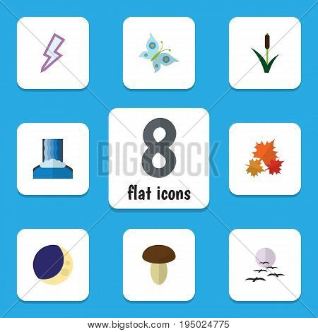 Flat Icon Natural Set Of Canadian, Cattail, Champignon And Other Vector Objects. Also Includes Mushroom, Champignon, Thunder Elements.