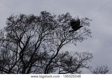 A bird flies against a black silhouette of a tree