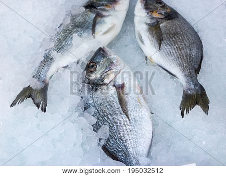 fresh catch of seabream on mediterranean market
