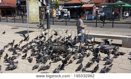 Sarajevo, Bosnia and Herzegovina - June 25, 2017: The boy feeds herd of pigeons on the market