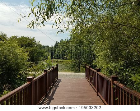 dark wood boardwalk and a pond and many trees