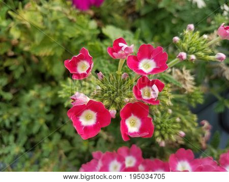 small red and pink flowers blooming and green leaves on plant