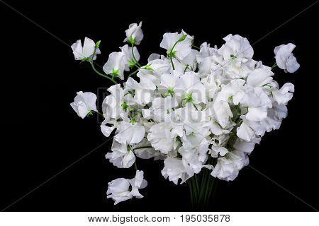 Beautiful white Lily Flowers Border. Nature .