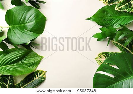 Beautiful composition with variety of fresh exotic plants on white background