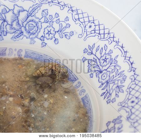 Crab and sea crayfish in the shell they live in a plate filled with sand and sea water