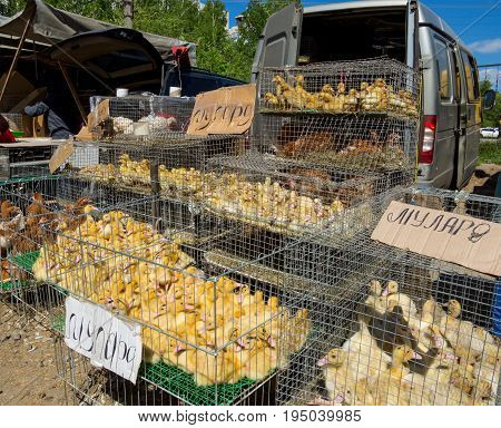 Voronezh, Russia - May 13, 2017: Row with poultry on the street market