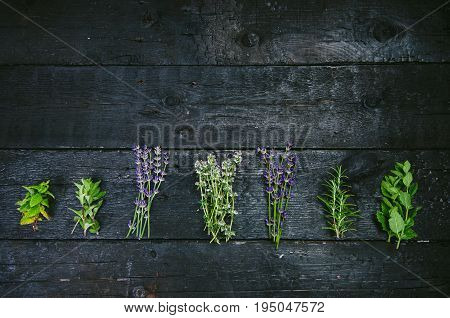 Lavender flowers, rosemary, mint, thyme, melissa with old scissors on a black wooden table. Burnt wood. Spa and cosmetic or cooking background.
