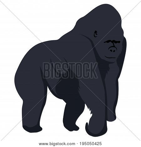 Isolated Gorilla Sketch
