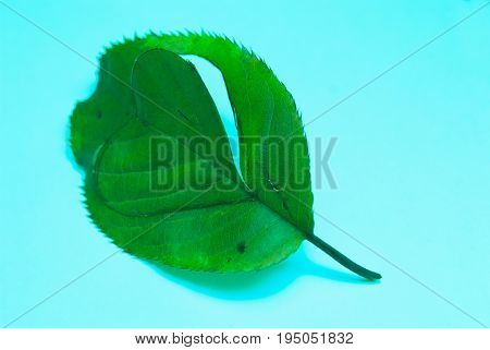 eco friendly symbol from leaf with heart shape natural resources concept