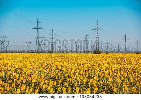 Power pylons and high voltage lines in an agricultural landscape with sunflower in Bulgaria.