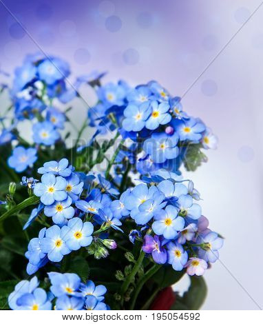 forget-me-flower on a white background. Nature .